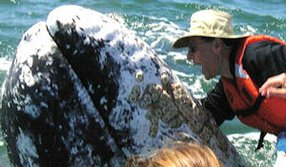 Samueli: Broadcom cofounder won auction for trip to kiss whales