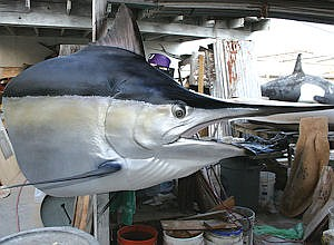 Marlin head: Living Designs Taxidermy mounts hides, adds life-like touches