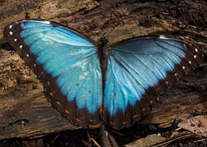 San Diego Zoo Global is sponsoring the 2011 Biomimicry Conference in San Diego. Biomimicry is the discipline of applying nature's principles to product design, such as the way a butterfly's colorful wings are imitated in Qualcomm's mirasol display for cell phones.