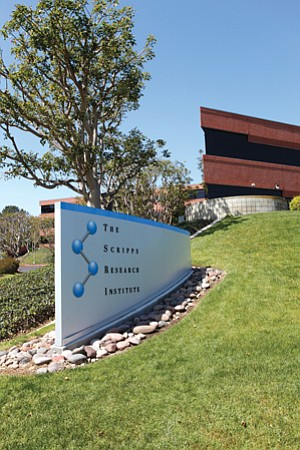 The structure of the partnership between Scripps Research Institute and Bristol-Meyers Squibb is the first of many such arrangements Scripps hopes to pursue.