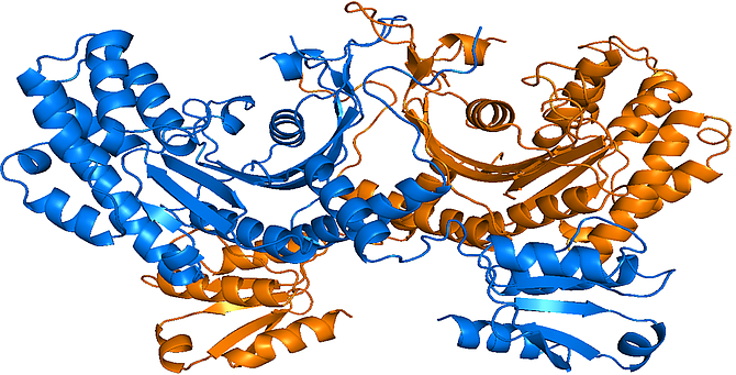 This is a visual representation of aTyr's anti-inflammation drug molecules.