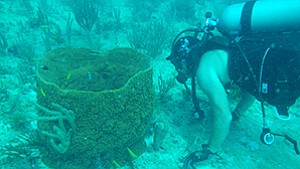 Sirenas Marine Discovery Inc. is diving into nature in search of the ocean's secrets to fighting diseases.