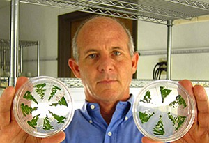 Steve Mayfield, founder of Sapphire Energy and the director of the California Center for Algae at UC, San Diego, said the value is in Omega-3 oils and certain proteins.