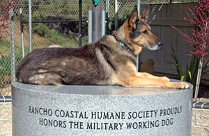 Retired military working dog Chyba, holds a place of honor atop an unfinished memorial to military working dogs at Rancho Coastal Humane Society. A statue modeled on Chyba was later installed on the pedestal.