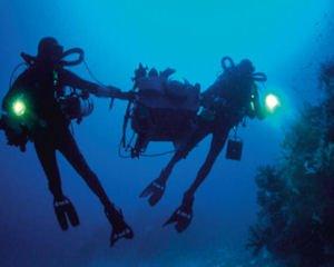 Imax shoot: recent films spotlight underwater ecology