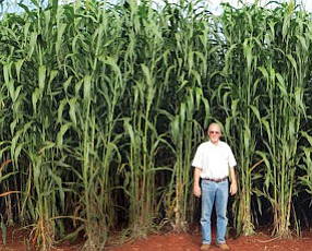 Harvest Time: Michael Stephenson, vice president of operations, stands next to sweet sorghum crop in Brazil grown from seeds genetically engineered by Ceres.