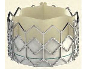 Edwards Sapien: heart valve maker ranked No. 7 among large companies, with 25% increase