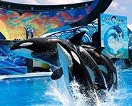 Photo courtesy of SeaWorld Entertainment
