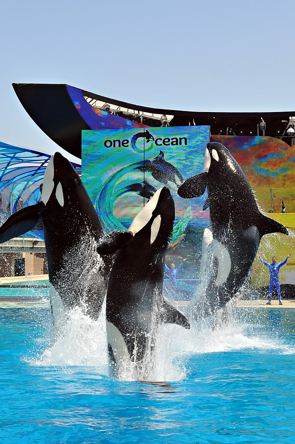 Photo courtesy of SeaWorld San Diego