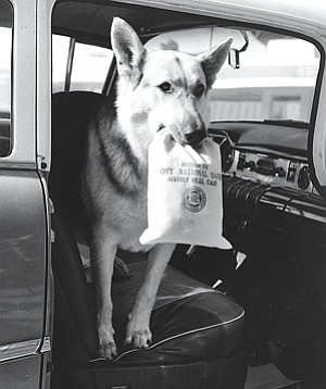 Star Power: Rin Tin Tin at promotional event for new City National branch in undated photo.