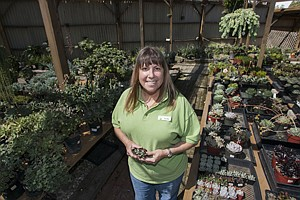 Growing Business: Ellyn Meikle, owner of Water Wise Garden Center in Torrance, with succulents at her nursery.