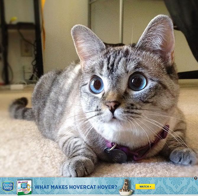 Cat imagine overlaid with GumGum advertisement at bottom