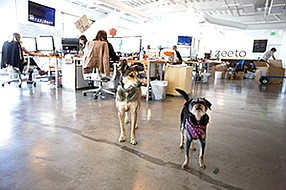 Zeeto is among the growing number of software companies downtown and allows employees to bring their dogs to work. Photo courtesy of Kyle Emery of Zeeto