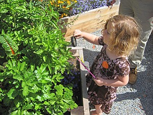 Photo courtesy of the New Children's Museum A child explores a vegetable plant in the New Children's Museum Garden Project.