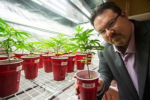 Potted Plants: Founder Brennan Thicke at Venice Beach Care Center dispensary.