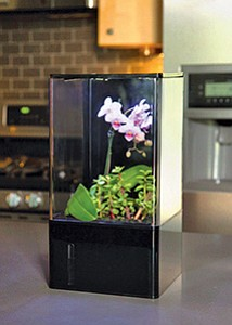 Plants thrive in the EcoQube Air, a mini-greenhouse that also cleanses the air. Photo courtesy of Aqua Design Innovations