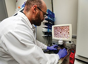 Scientists Cassiano Carromeu, above, and Wonjong Si, left, prepare cells at StemoniX Inc.