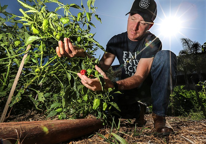 Jared Criscuolo fertilizes his pepper plants with an environmentally friendly product he developed. Photo by Jamie Scott Lytle.