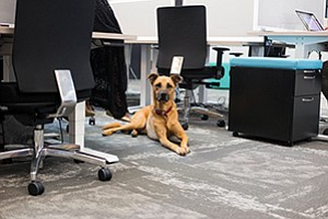 Following a trend at tech companies, local coworking space DowntownWorks lets its tenants bring pets to the workplace. Photo courtesy of DowntownWorks