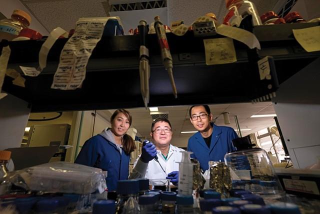 Crop Caretakers: UCLA Professor Yi Tang (center) with researchers Undramaa Bat-Erdene (left) and Yan Yan (right).