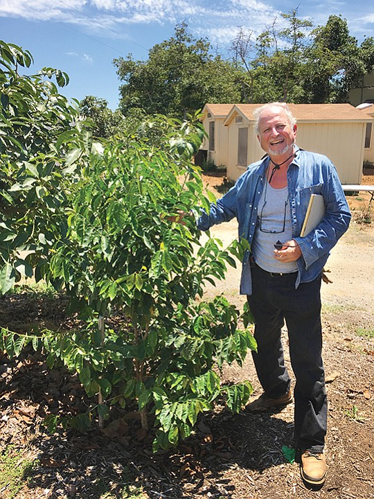 Farmer and consultant Scott Murray, who works with singer/songwriter Jason Mraz at his Oceanside farm, Mraz Family Farms, stands next to a coffee tree. Photo courtesy of Scott Murray