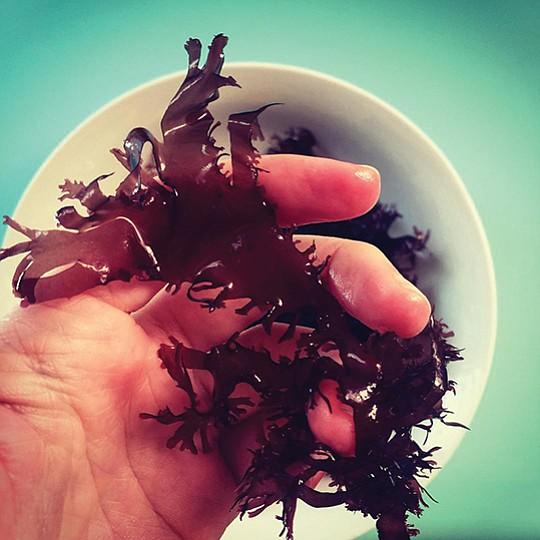 Photo courtesy of Sunken Seaweed