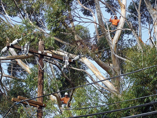 Edison Crews: Maintenance could be key factor in determinations of liability on wildfires.