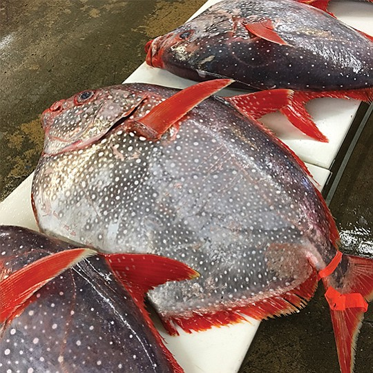 """Opah, or """"moonfish,"""" has seven distinct-flavored sections of meat inside and can weigh up to 200 pounds. Photo courtesy of Catalina Offshore Products"""