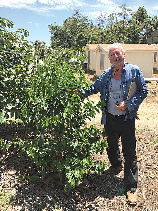 Farmer and consultant Scott Murray, who works with singer/songwriter Jason Mraz at his Oceanside farm, Mraz Family Farms, stands next to a coffee tree.