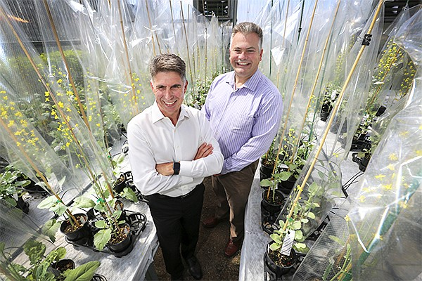 Cibus CEO Peter Beetham, left, and Chief Science Officer Greg Gocal stand in the company's canola greenhouse. Cibus, which uses gene editing to select for desirable crop traits, recently postponed its initial public offering.