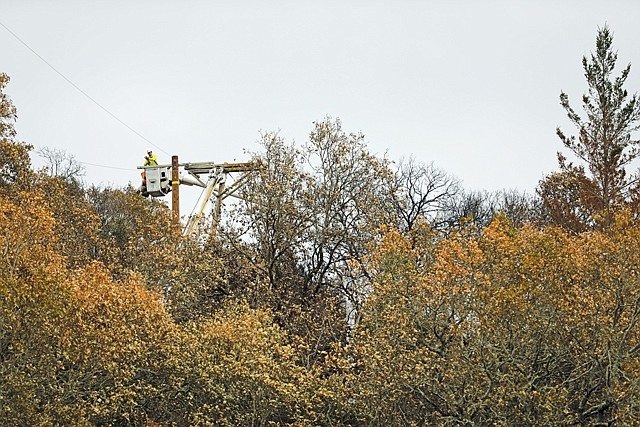 SCE workers trim trees around the utility's power lines.