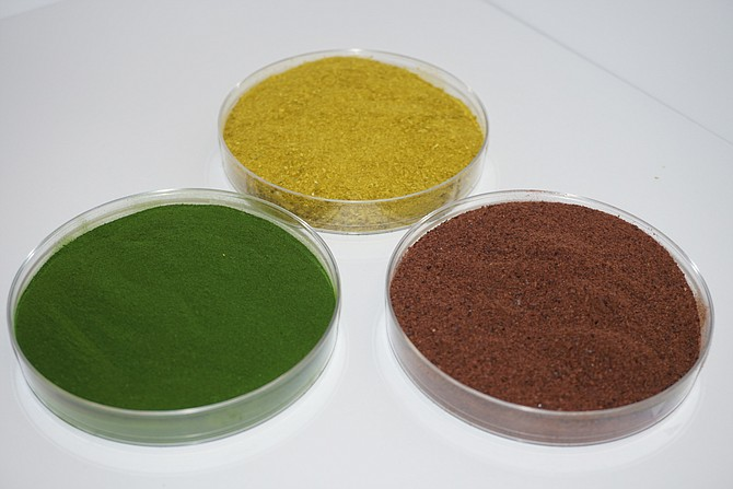 Triton Algae Innovations recently secured regulatory approval to sell its algae-based protein product. Its algae come in three colors: red, green and yellow.