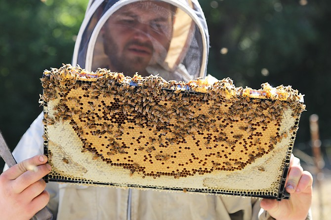 Meadiocrity Mead, located in San Marcos, does its own beekeeping, according to the company. Photo courtesy of Meadiocrity Mead.
