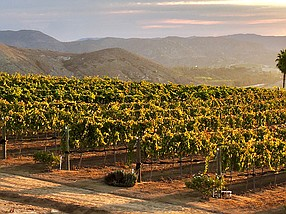 Photo courtesy of Hungry Hawk Vineyards & Winery.