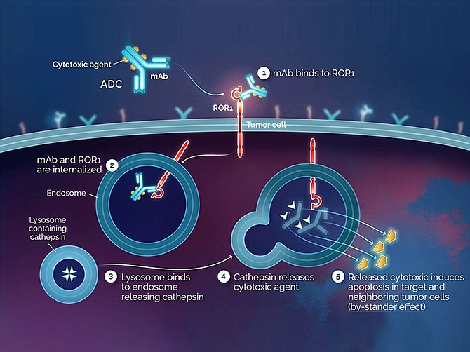 Photo courtesy of VelosBio. VelosBio's pipeline seeks to produce novel targeted therapies across a broad range of cancers.