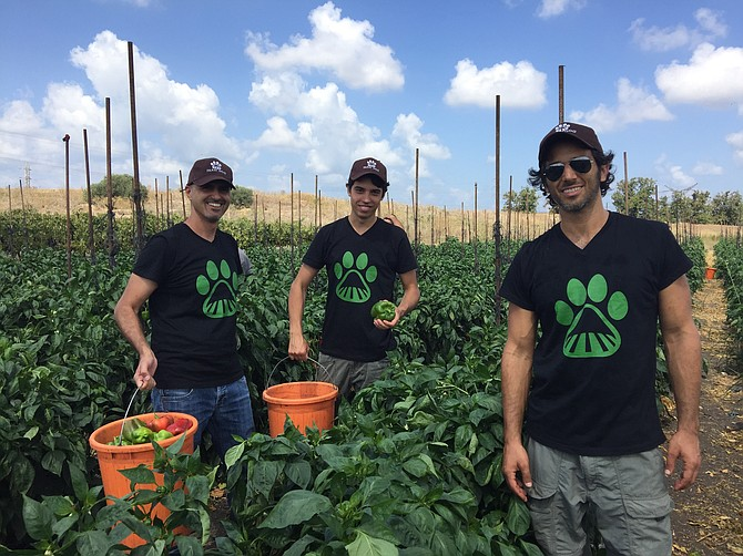 Farm Dog execs Alon Shmueli, Bar Galditzky and founder Liron Brish.