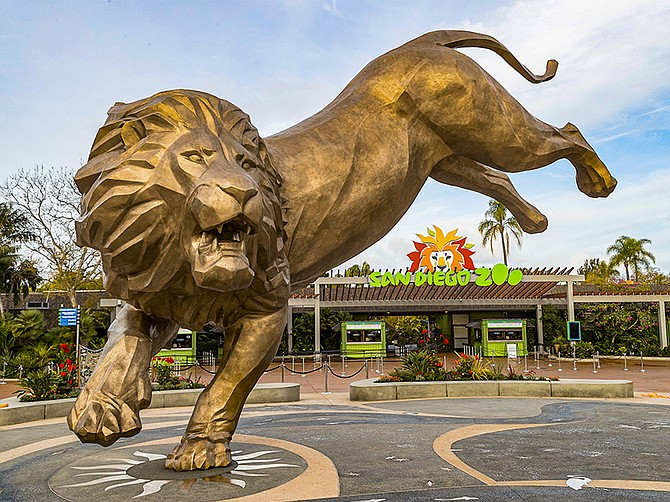 Photo courtesy of San Diego Zoo Global. San Diego Zoo Global typically hosts its R.I.T.Z. fundraiser gala on the grounds at the San Diego Zoo. This year, the event will be virtual.