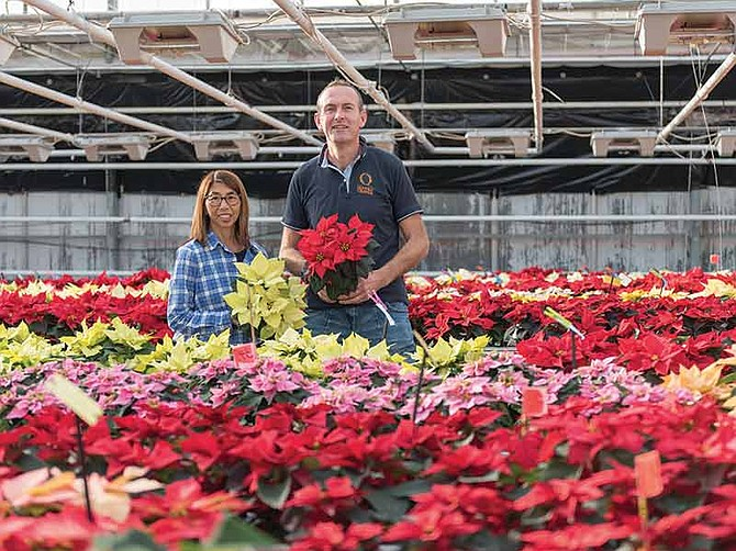 Photo courtesy of Dümmen Orange. Ruth Kobyashi and Arjan Koot are the two poinsettia breeders for Dümmen Orange. Together, they have bred the majority of the poinsettia varieties offered worldwide today.
