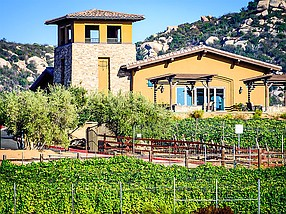 Photo courtesy of Pacifica Companies. Trevi Hills development in East County features a winery and gives 250 homeowners a chance to have a vineyard on their property.