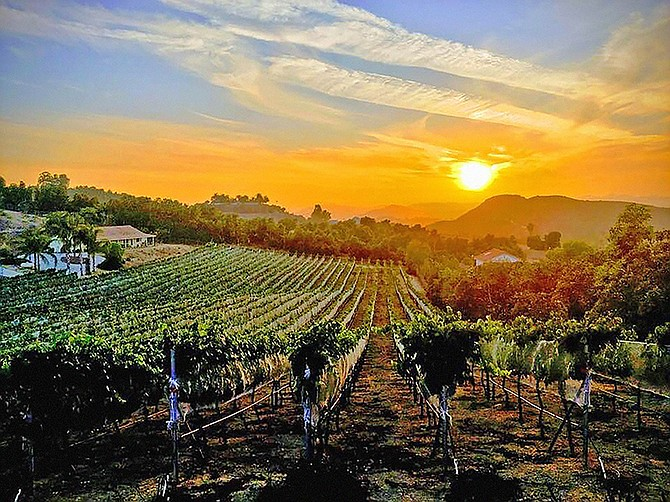 The Altipiano Vineyard.