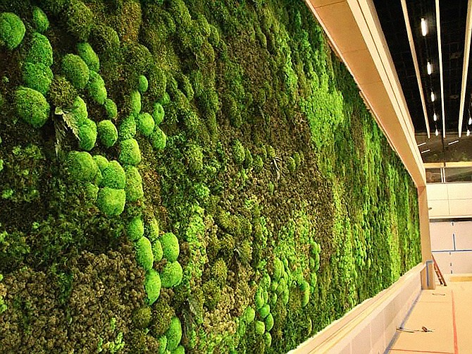 Photos courtesy of Good Earth Plant Company. Living Walls have become a specialty of Good Earth Plant Company.