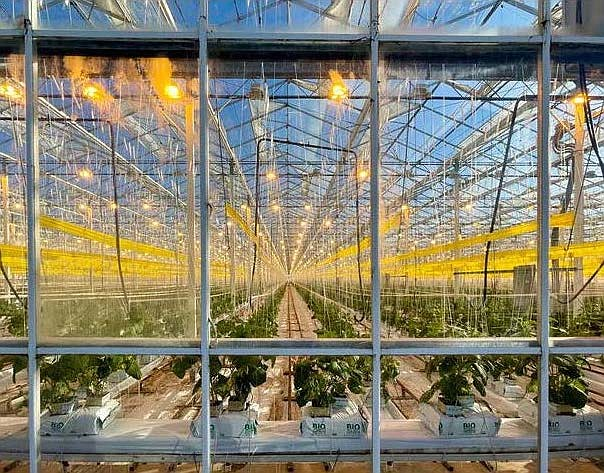 Long Beach-based Glass House Group is the state's largest cannabis producer.