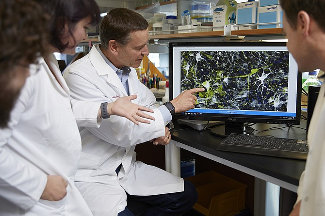 Clive Svendsen, executive director of the Cedars-Sinai Board of Governors Regenerative Medicine Institute, in his lab.